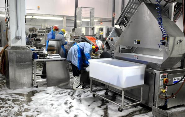 Higienização da indústria alimentícia