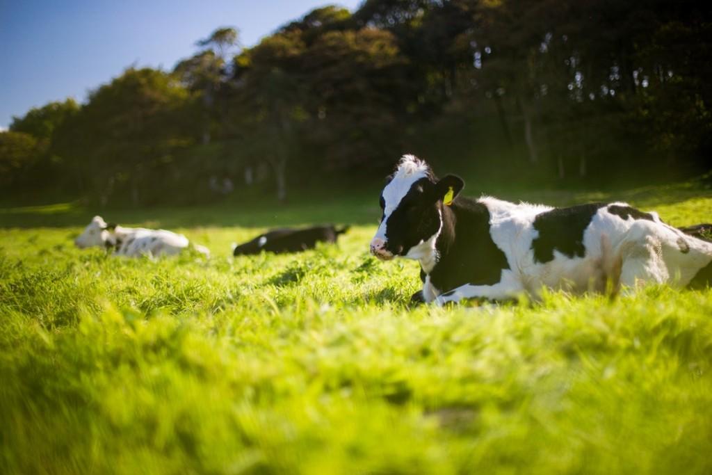 Preservar o bem-estar animal garante a qualidade dos produtos