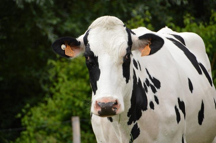 Cenário favorável aos produtores de leite aumenta expectativa do setor