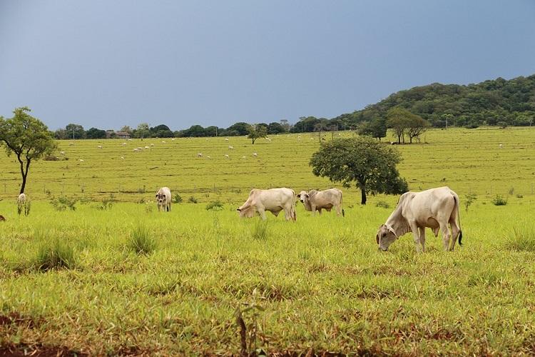 Veja como o acordo entre Brasil e Paraguai ajuda no controle sanitário