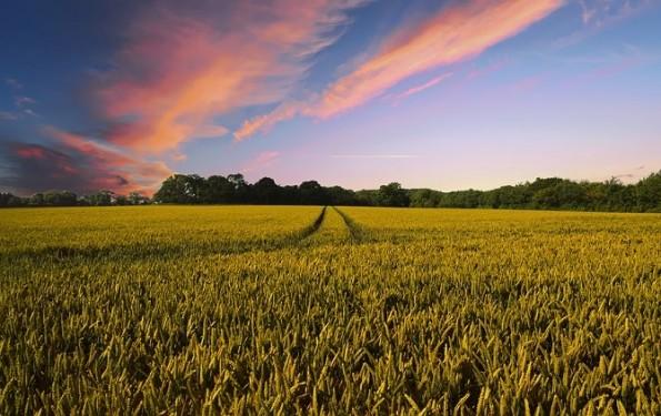 Dia da agricultura: como fazer o adequado manejo das culturas